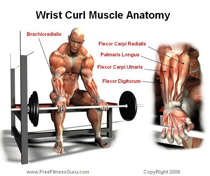 What are the Benefits of Wrist Curls? Forearm Strength 101 - Dark ...