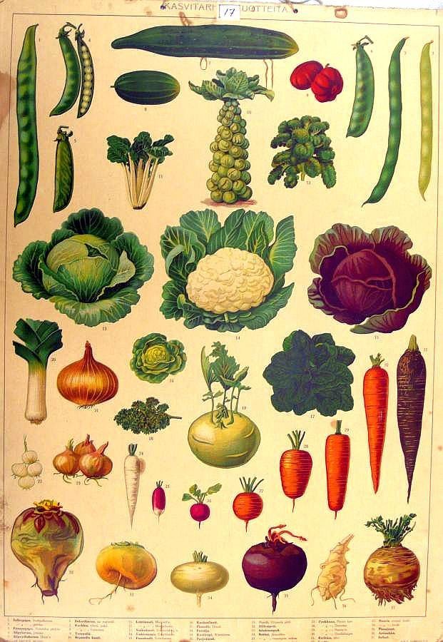 summer and vegetables