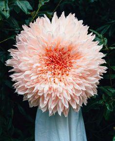 Tiffanie Turner's GIANT paper flowers…