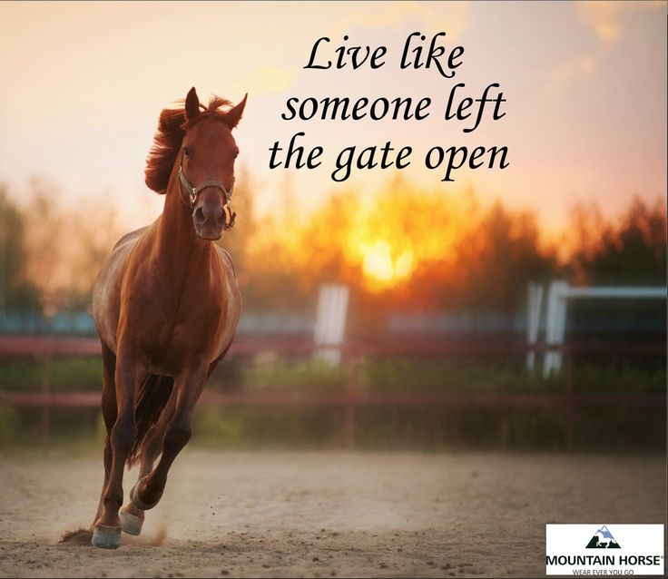 Live Like Someone Left The Gate Open Quote: 17 Best Images About Horse Quotes On Pinterest