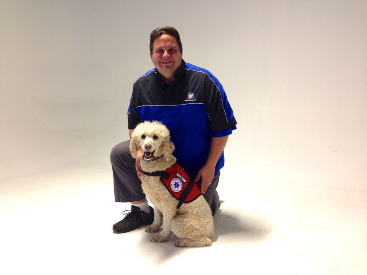 Best Dog Breeds For Diabetic Service Dogs