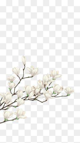 Whiteflowersplantdecorative Materialdecorativematerialwhite