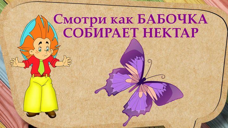 БАБОЧКА СОБИРАЕТ НЕКТАР   Познавательное видео для малышей