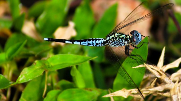 Blue Drangonfly by Saikanth Dacha on 500px
