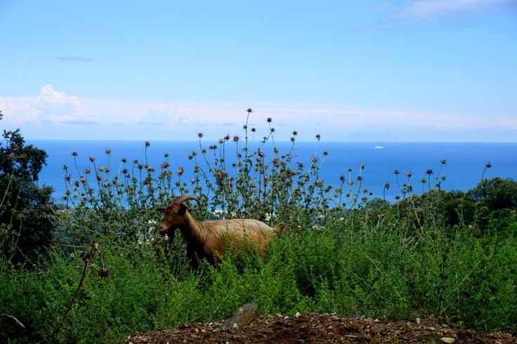 castagniccia corse road trip blog voyage 02