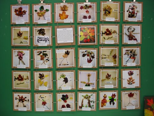 Class Quilt of Leaf Creations - could adapt for other subjects. This blog is amazing.  Via http://thecuriouskindergarten.wordpress.com/page