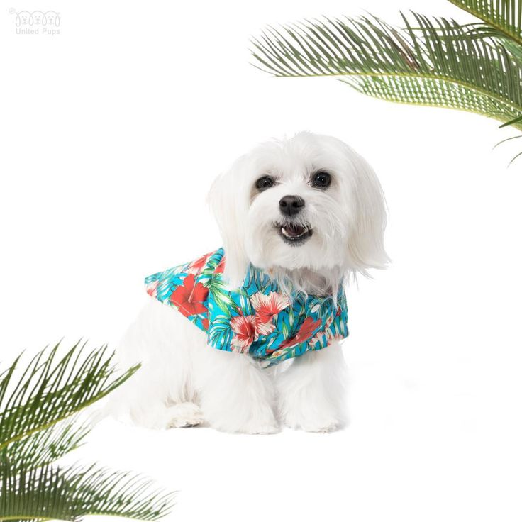 Love the ocean blue Hawaiian shirt! We do have two other colors (Red and Black). Check them out and let us know your favorite color! ・・・ Hawaii shirts are vailable in three colors! Check them out http://unitedpups.com/aloha ・・・ #aloha #hawaiishirt