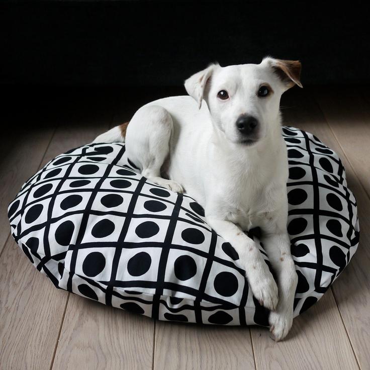 Modern bed, modern pup.