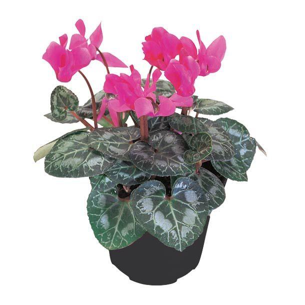 Las 25 mejores ideas sobre flores de sombra en pinterest - Plantas de sombra exterior ...