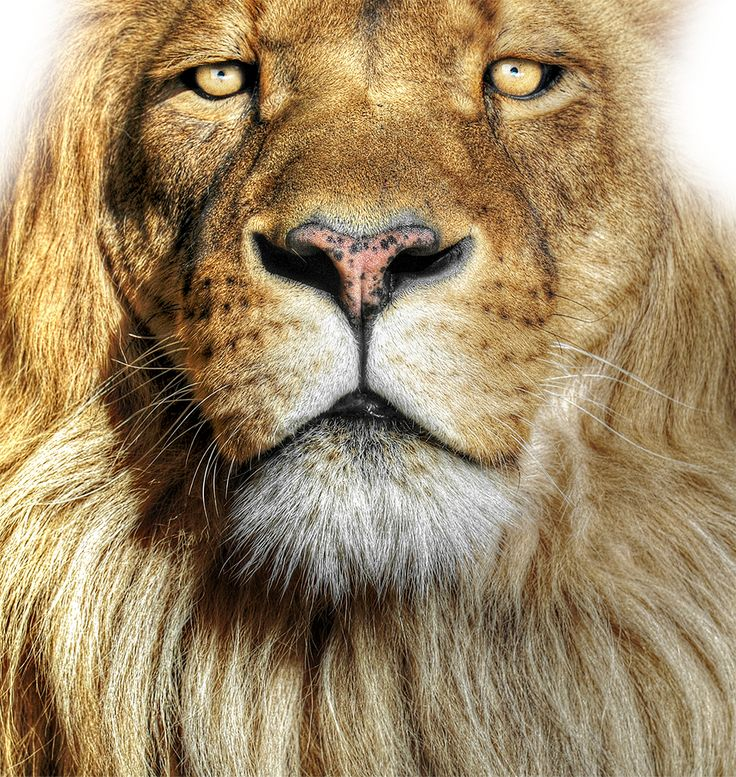 Lespakketten - Safaripark Beekse Bergen. Afrika gevaarlijk dichtbij!