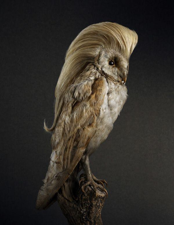 owl with a fine hairdo