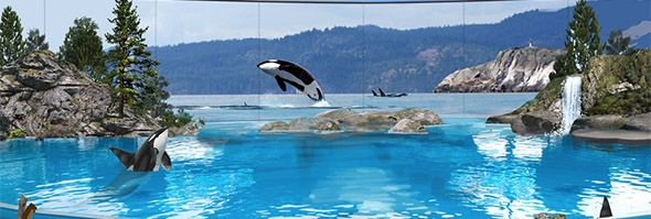 SEAWORLD ANNOUNCES LAST GENERATION OF ORCAS