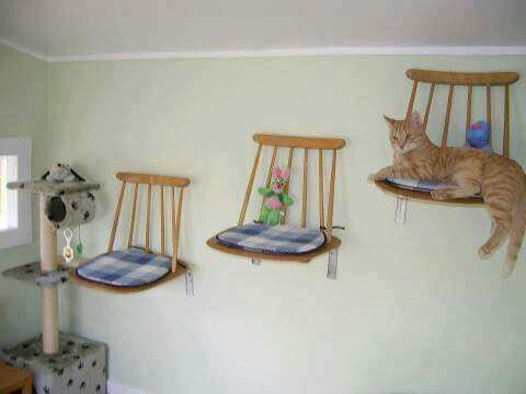 great recycle, repurpose project for kitty crew... if lucky enough to find set of chairs...