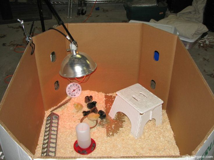 Chicken Coop Heat Lamp