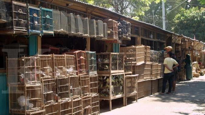 Pasar Depok Pasar Satwa Terkenal di Kota Solo  Hewan Piaraan