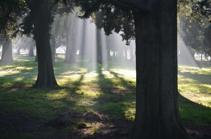 Un día con neblina en el bosque de La Plata.