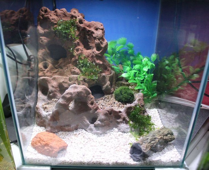 467 best aquathier kreative deko ideen images on pinterest decorating ideas aquarium and - Aquarium ideen ...