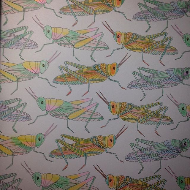 #oneoftwo #critters #insects #milliemarotta #milliemarottaanimalkingdom #animalkingdom #adulting #nofilter #done #adultcoloring #adultcoloringbook #coloringtherapy #completed #allthecolors #creepycrawlies