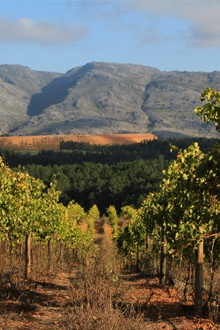 Come and spend 48 hours in the Elgin Valley, where you will indulge in fruit, deli foods, fine wines and some old Cape legends