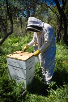 13 Tips for Backyard Beekeeping Beginners in 2018 (With ...