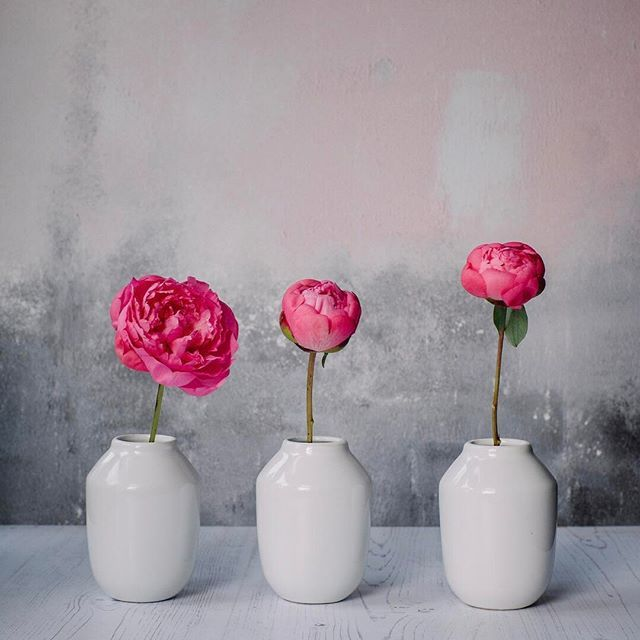 Pretty peonies all in a row 🌸🌸🌸 These are my shy pink peonies, whose tightly furled petals scarcely bloomed at all. The scent and colour were still lovely though. 🌸🌸🌸 #rsa_ladies #tv_living #global_ladies #click_vision #jj_florals #dsfloral #still_life_gallery #momentsofmine #stylingtheseasons #byarrangement #simpleandstill #embracingtheseasons #seasonalfloweralliance #inspiredbypetals #allthingsbotanical #botanicalpickmeup #caughtflowerhanded #floralfridaycompetition…