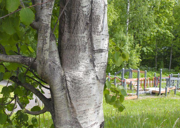 Foibessa toimintapuisto on omalla pihalla.