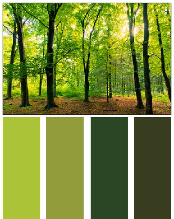 Have you considered using some of nature's color palettes?