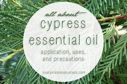Learn about the benefits of cypress oil for hormonal balance, joint and muscle support, and more, via SustainableBabySteps.com