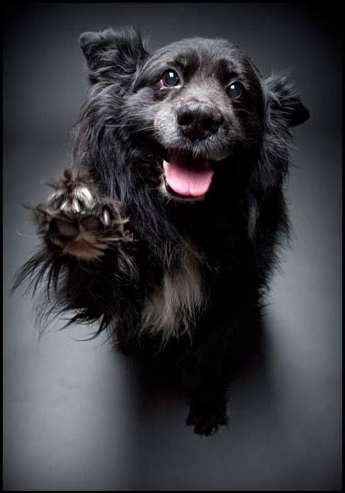 Las 80 imagenes mas expectaculares de perros.   senderismo con mi perro