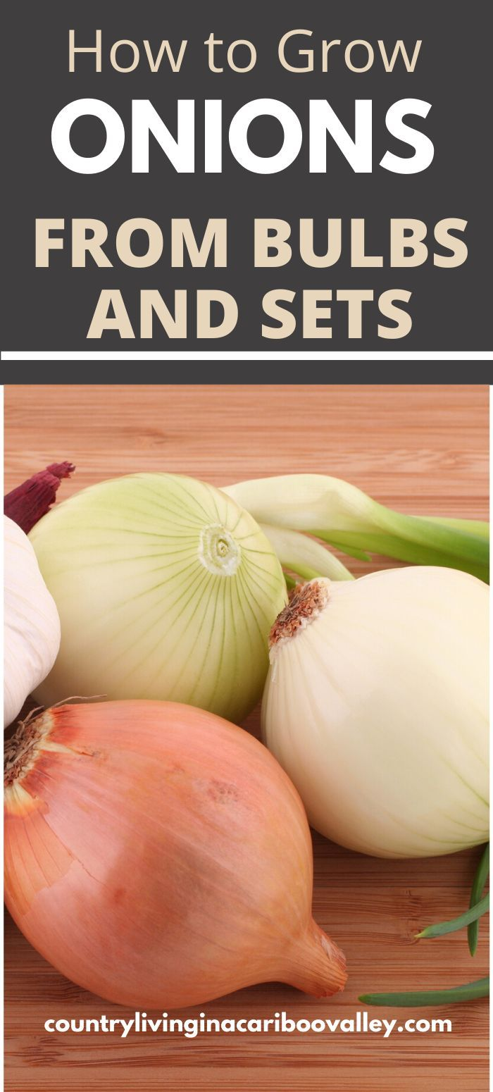 everlasting onions how to grow