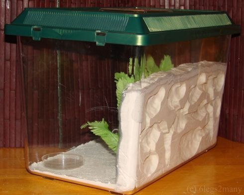 How to make a cheap ant formicarium -- ahh, i can't WAIT to do this with Lucas! I might just do it before he's old enough.. lol.. because this stuff fascinates me!