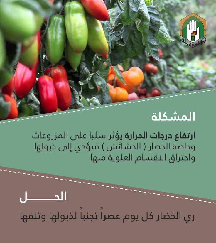 ارتفاع درجات الحرارة يؤذي المزروعات Plants Garden Vegetables