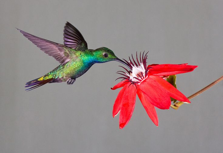 5 flowers that attract hummingbirds...I want to plant all of these at camp because I love watching my hummingbirds!!