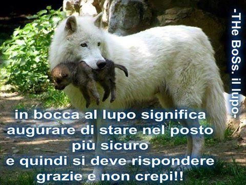 In bocca al lupo...