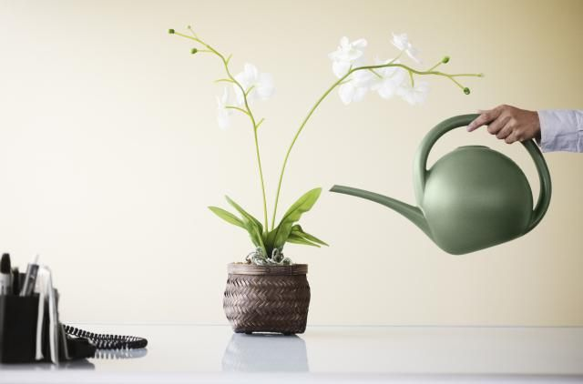 How to water orchids correctly, with tips on frequency and common mistakes.