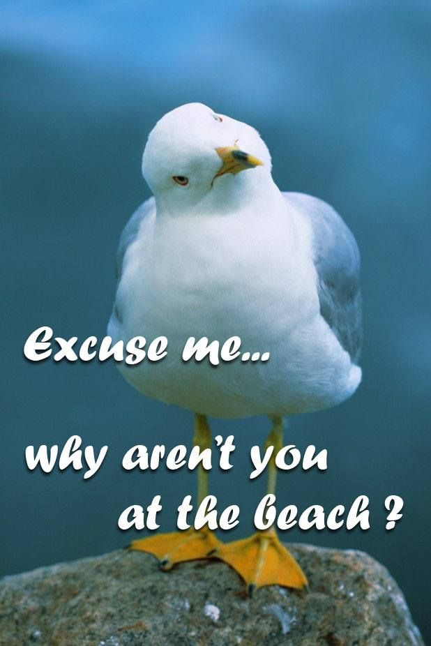 Image result for beach seagull cute pics