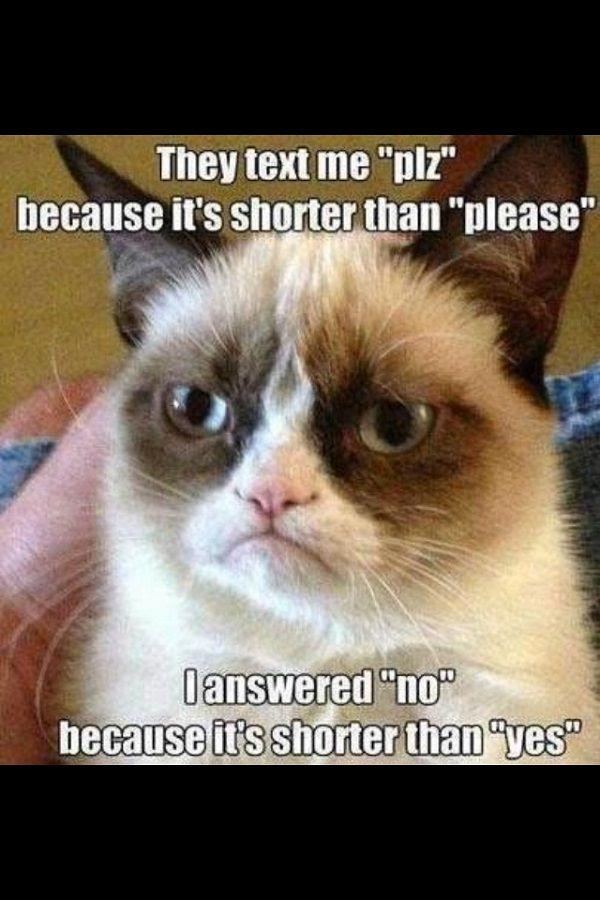Best Grumpy Cat | the 50 best hilarious grumpy cat memes copyright 50 best