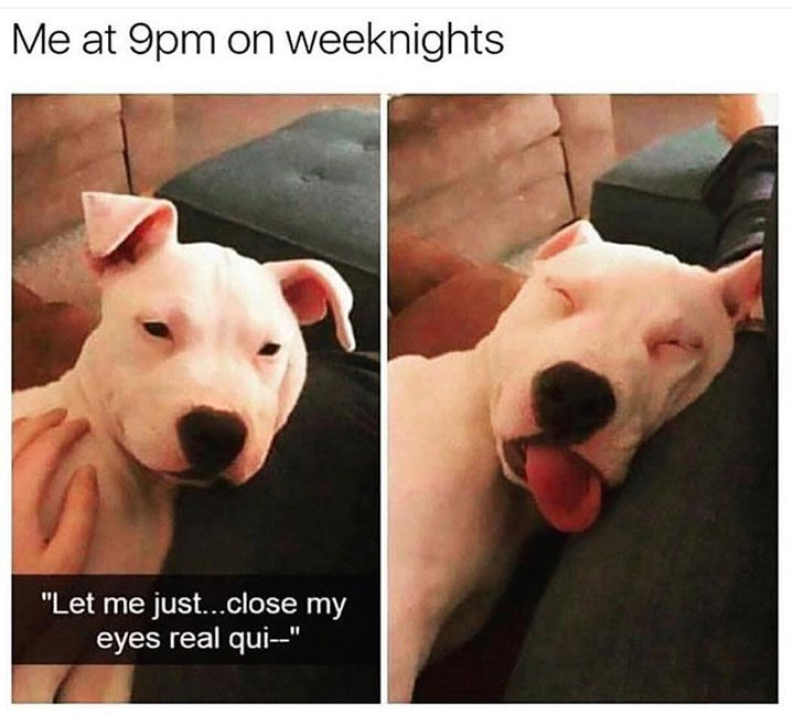 Animal Memes to Make You Laugh on Bad Days - 15