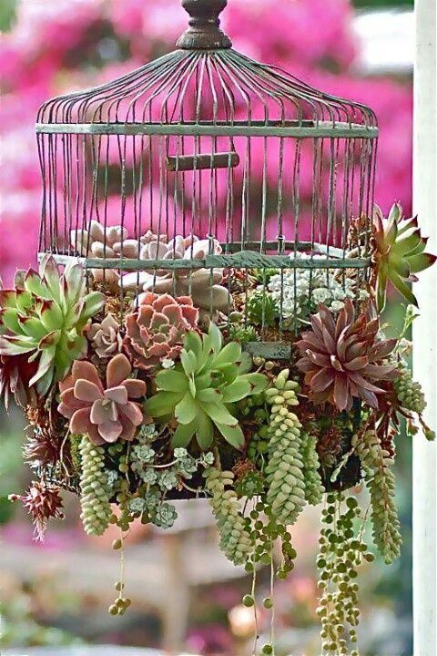 Using Bird Cages For Decor: 46 Beautiful Ideas | DigsDigs One more 'inspiration' - LOVE succulents in every garden!!