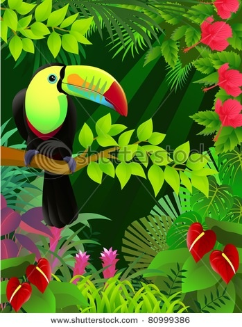 Toucan in the tropical forest...