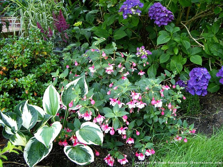 One Of My Shady Garden Areas Hydrangeas Perennial