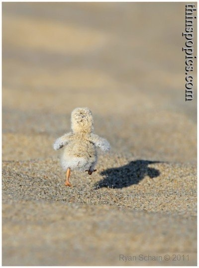 My exercise inspiration!: Hotsand, Baby Ducks, Stuff, Hot Sands, Adorable, Funny Animal, Things, Smile, Birds