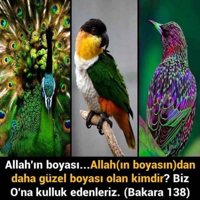<p style=margin: 0px; font-size: 13px; line-height: normal; font-family: Verdana;>Allahın boyası... Allah(ın boyasın)dan daha güzel boyası olan kimdir? Biz (yalnızca) Ona kulluk edenleriz.<span style=color: rgb(18, 20, 25); font-family: Trebuchet MS, Arial, Helvetica, sans-serif; background-color: rgb(255, 255, 255);>[Bakara Suresi, 138]</span></p>