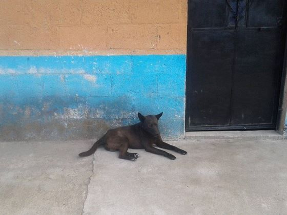 "Join our spay/neuter campaign #38 to ""fix"" 50 dogs and cats in rural Guatemala in the department of Amatitlan in Aldea el Salitre. With $17 you can fund one surgery and prevent so much animal homelessness and suffering. The clinic will occur on March 12, 2017.  Please donate:  https://www.youcaring.com/peoplesavinganimals-757516"