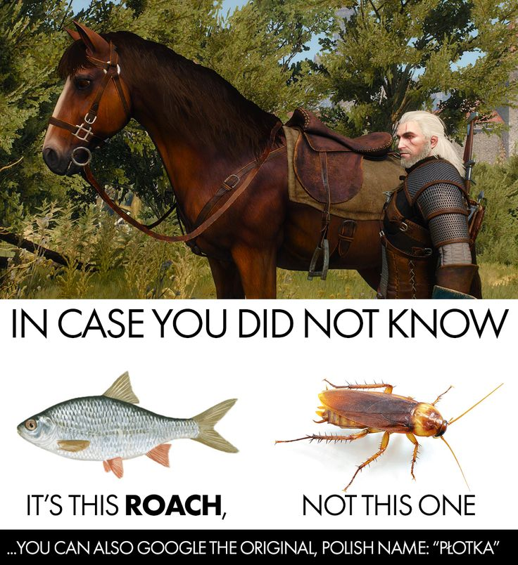 [The Witcher 3] TIL why Geralt names all of his horses Roach