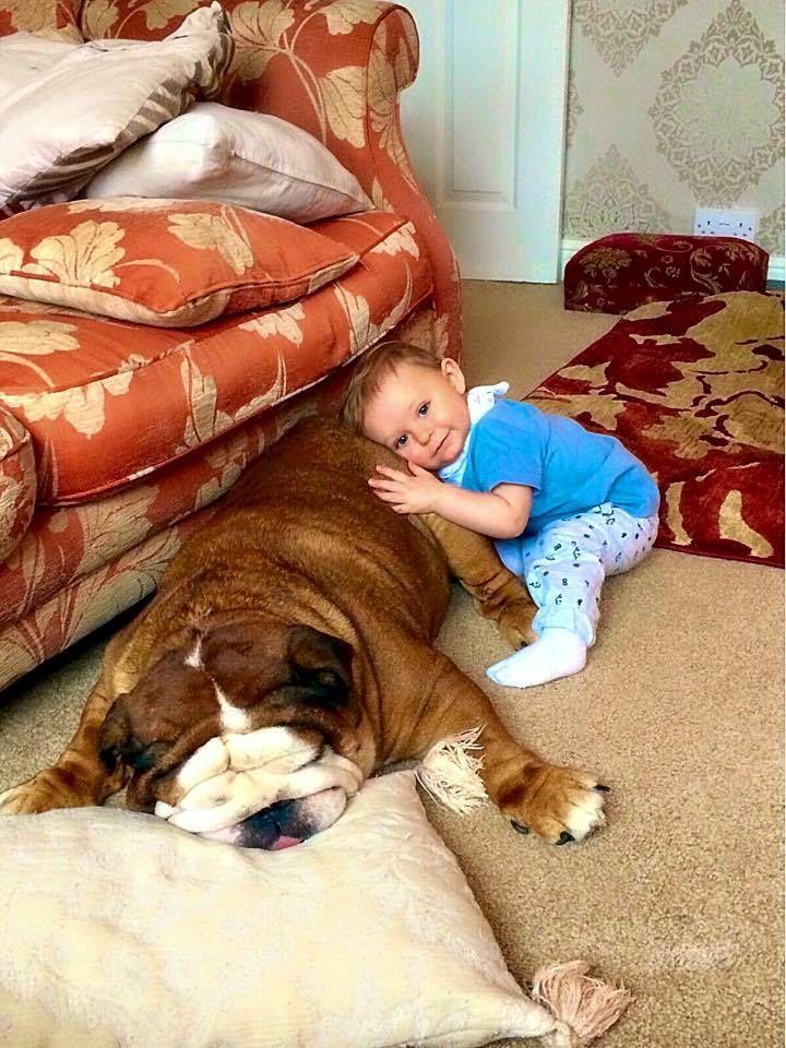 #Bulldog                                                                                                                                                     More