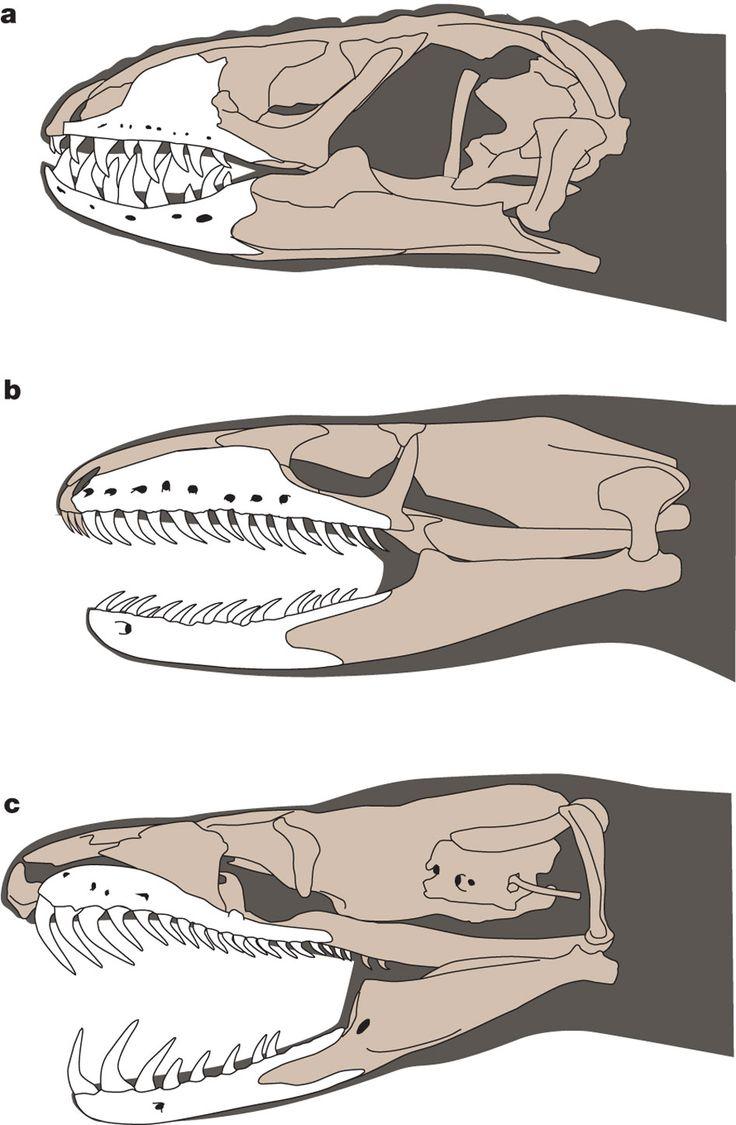Snake Skull Diagram All Kind Of Wiring Diagrams