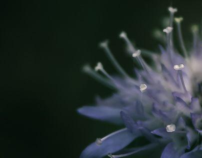 "Check out new work on my @Behance portfolio: ""Last flower in the garden.."" http://be.net/gallery/44194853/Last-flower-in-the-garden"