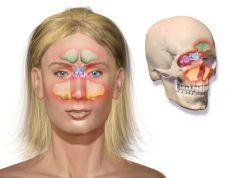 Co na ucpaný nos a zánět dutin? Stačí sníst pár gramů této bylinky