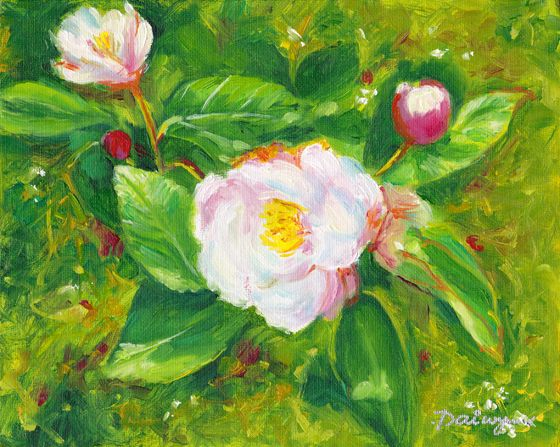 Apple blossom heralds the advent of Spring.  Oil painting by Dai Wynn on canvas panel.  20.3 cm high by 25.4 cm wide (8 inches by 10 inches) approximately.  To check on availability for purchase, please visit http://www.daiwynn.com/artist/the-first-blush-of-spring/